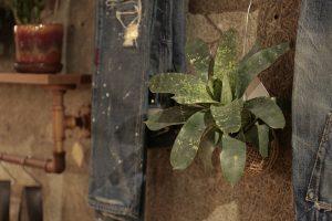 植物の画像