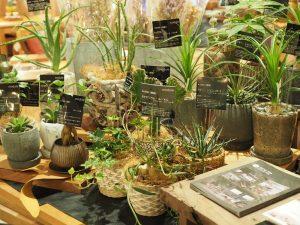 SOLID福岡店植物の画像