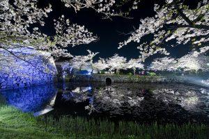 桜の名所舞鶴公園の画像