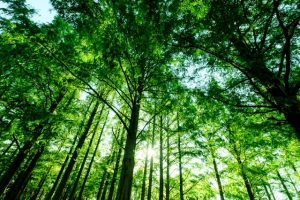 森 木 林 フリー素材