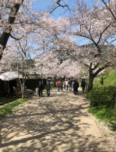 SOLID名古屋 桜