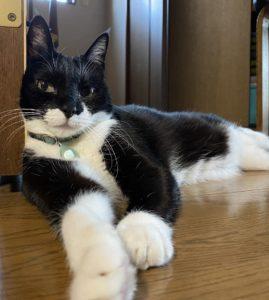 名古屋 河合 猫